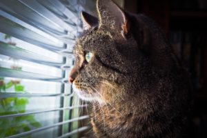 Na het zien van een vreemde kat in de tuin, kan de agressie overslaan op een mens of dier in huis.