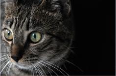 Een alerte kat